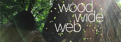 Wood Wide Web