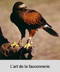 Fauconnier et son faucon